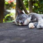 Uni korjaa elimistöä ja hellii mieltä