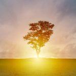 Mielen voima: Ajatukset kohti terveyttä