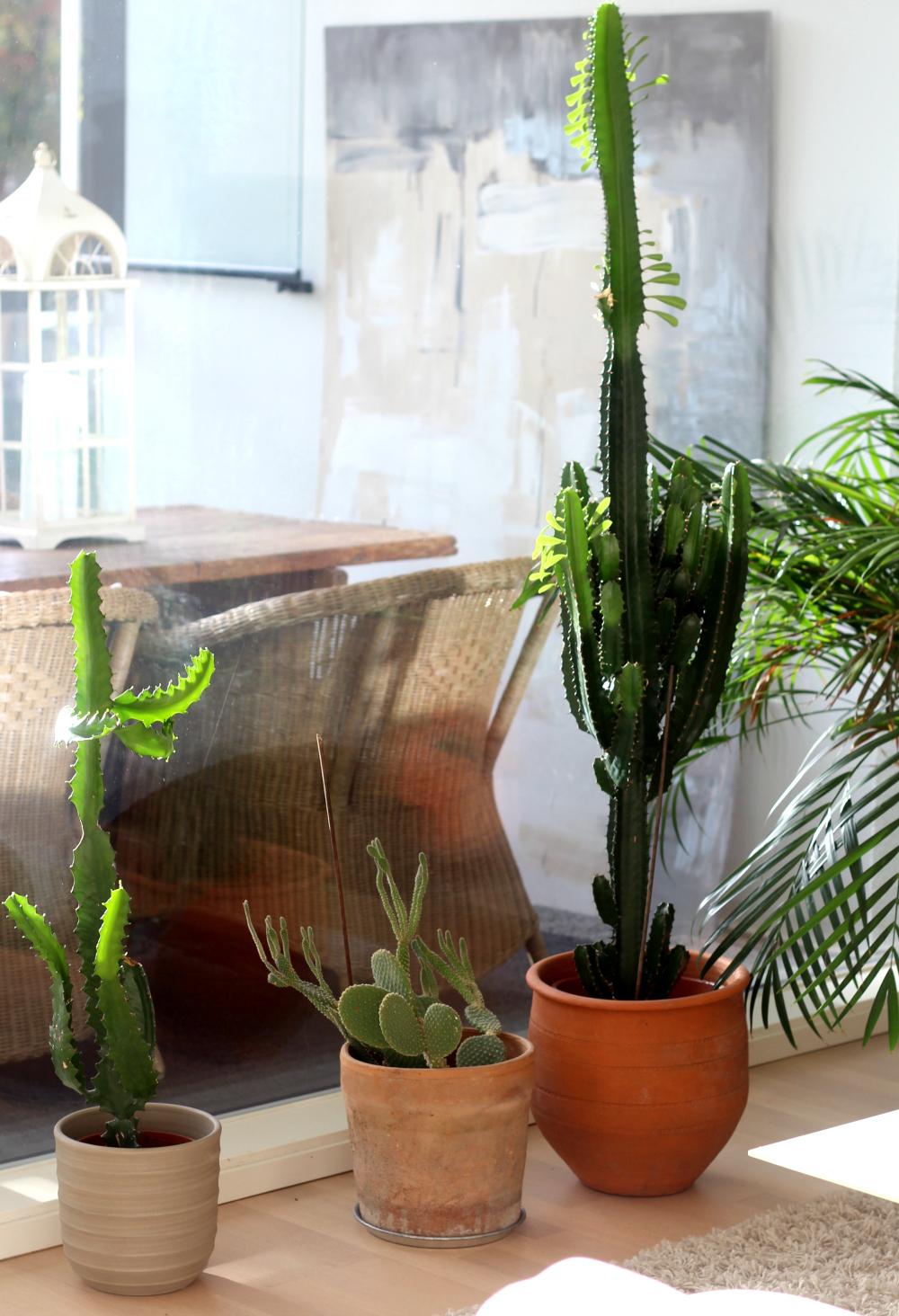 Pitkä kaktus